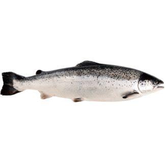 Вкус лосось